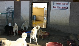 Nevşehir Belediyesi, Sokak Köpekleri İle İlgili Etkin Çalışma Yürütüyor